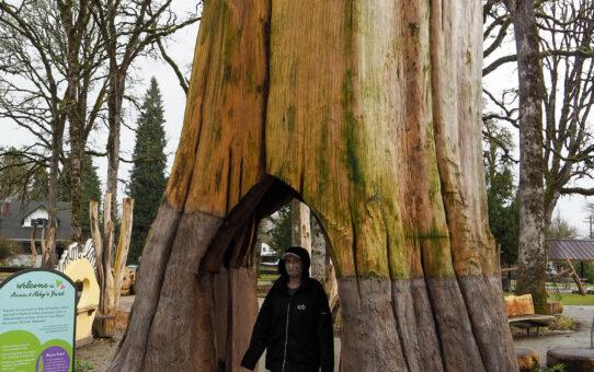 Inga Inside of a Tree
