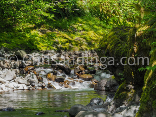 Wilson River - watermarked